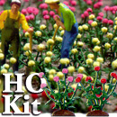 HO-SCALE COLORED ROSES