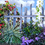 ROSE GARDEN FENCE WITH HOLLYHOCKS