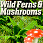 HO-SCALE FERNS AND MUSHROOMS