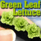 O-SCALE GREEN LEAF LETTUCE ROW