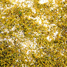 AUTUMN GOLD LEAF FOLIAGE 11