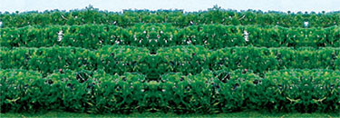 GREEN CROP & HEDGE ROW/ 8 PKG