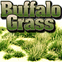 2/4MM SPRING GREEN BUFFALO GRASS 'SILFLORETTES'