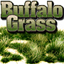 2/4MM SUMMER BUFFALO GRASS 'SILFLORETTES'