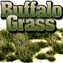 4/6MM LATE SUMMER BUFFALO GRASS 'SILFLORETTES'