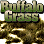 2/4MM AUTUMN BUFFALO GRASS 'SILFLORETTES'