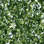 SUMMER GREEN SYCAMORE LEAF FOLIAGE
