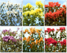 FLOWER GARDEN ASSORTMENT PACK