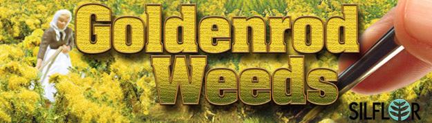 Silfor Goldenrod Weeds