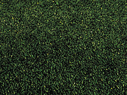 DEEP DARK GREEN MEADOW GRASS MAT 23