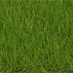 6MM SPRING GREEN STATIC GRASS 50g/1.7 oz.