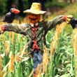 O-SCALE SCARECROW AND CROW