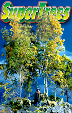 Click to see SuperTrees