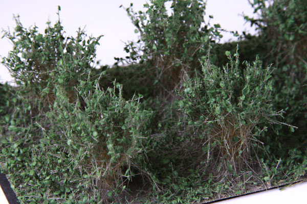 2CM - 3CM LOW DARK GREEN BUSHES