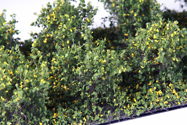 2CM - 3CM LOW YELLOW BUSHES