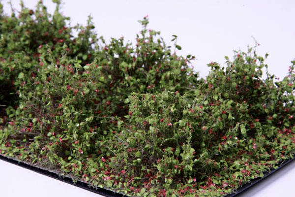 2CM - 3CM LOW RED BUSHES / 10 PCS.